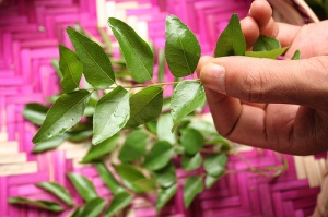 curry leaves - the essential flavor of Sri Lankan food