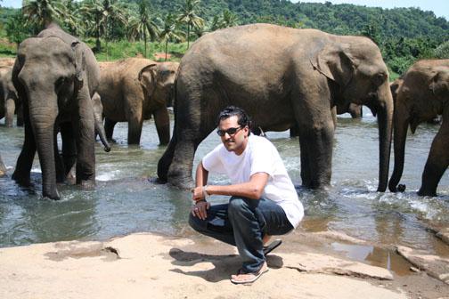 skiz_elephants_1